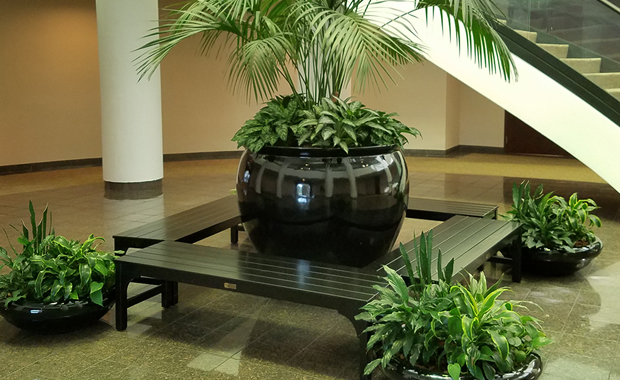 Sedgefield-Interior-Landscapes_Potted-Plants