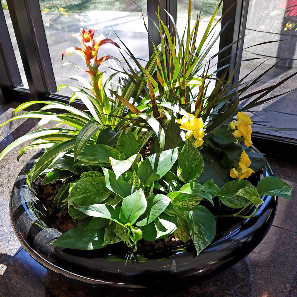 Sedgefield Interior Landscapes_Plants and Planters