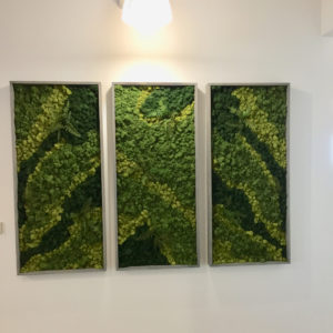 Sedgefield Interior Landscape_Moss Wall_Install