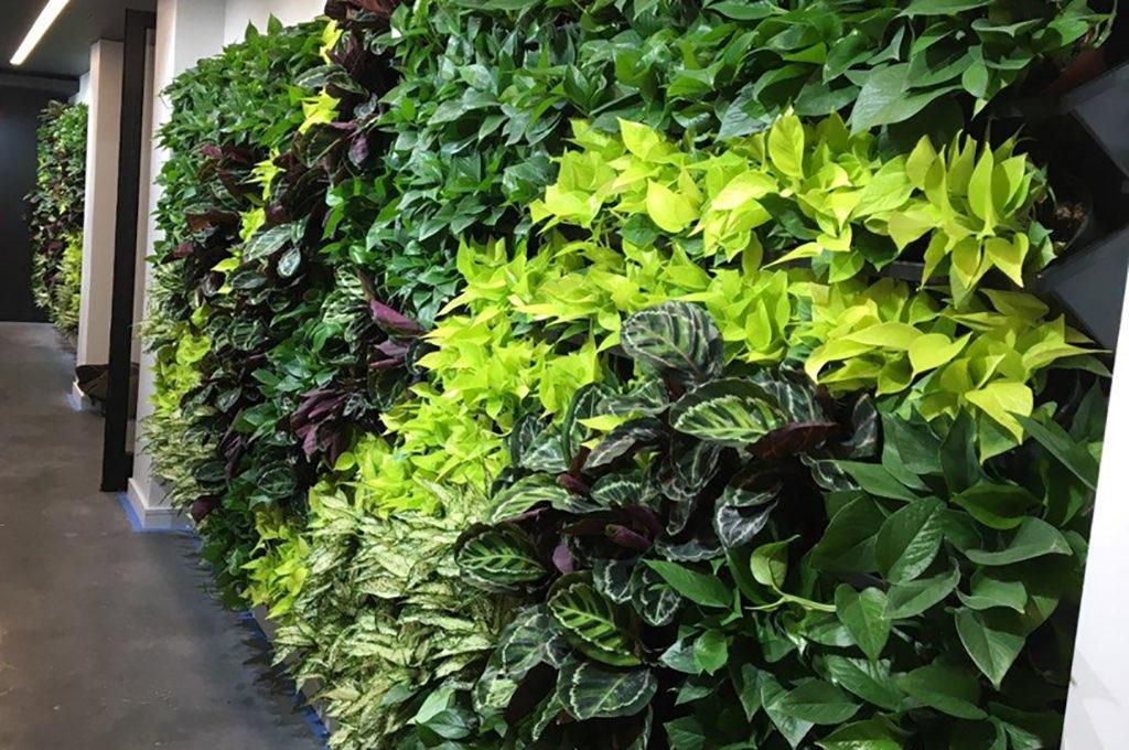 Sedgefield Interior Landscapes_Living Walls